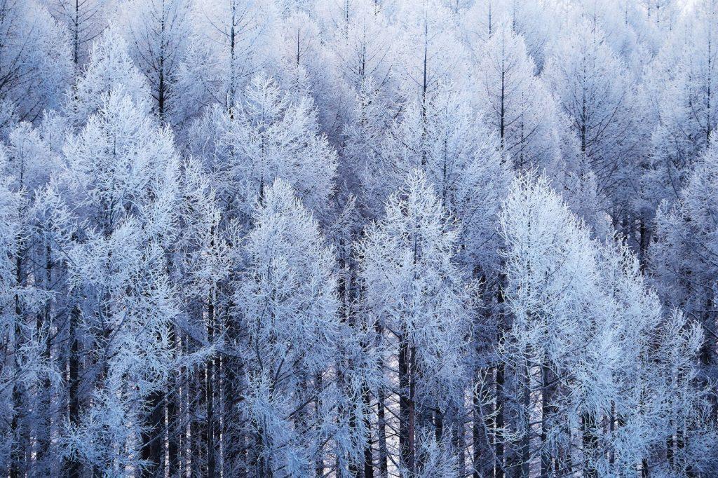 大寒の候の意味と読み方!時期やいつまで使う、寒中見舞いを含む例文も